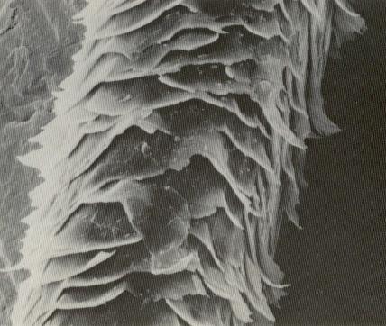 https://www.mikroskopie-forum.de/pictures004/160469_13509646.jpg
